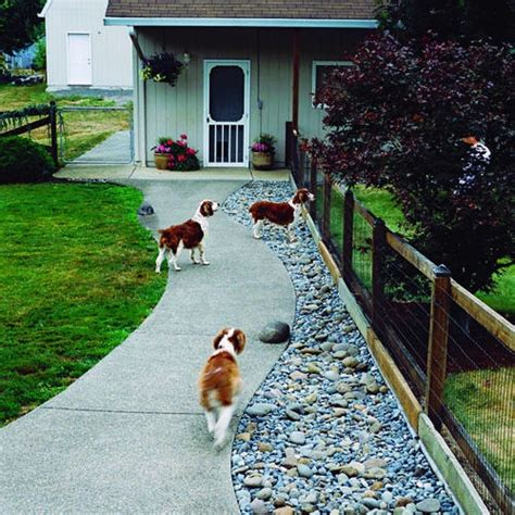 how to keep dog in yard without fence 8 dog friendly backyard ideas healthy paws