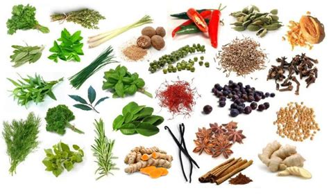 8 Must Herbs And Spices by Find The Herbs And Spices Quiz