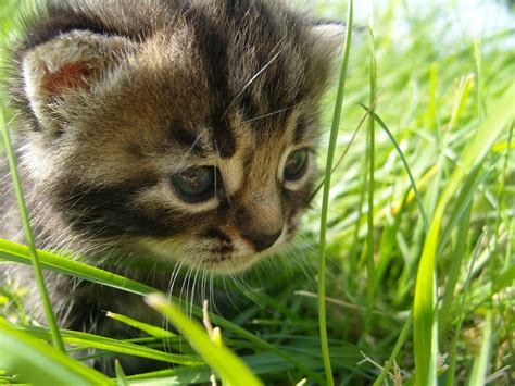 and cat pictures cats images hd wallpaper and background photos 22144469
