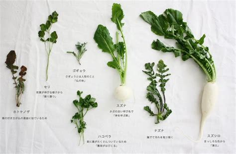 seven vegetables new year japanese vegetables for nanakusa gayu seven herb rice