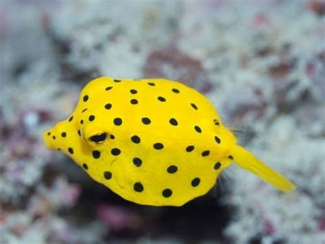 Prints Spotted In World by Top 5 World S Weirdest Fish