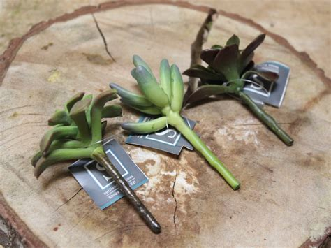 Succulent In Mini Glass With Ds Gr Artificial mini artificial succulent picks assorted set of 3 craft supply terrarium diy faux succulent