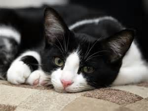 names for black and white cats