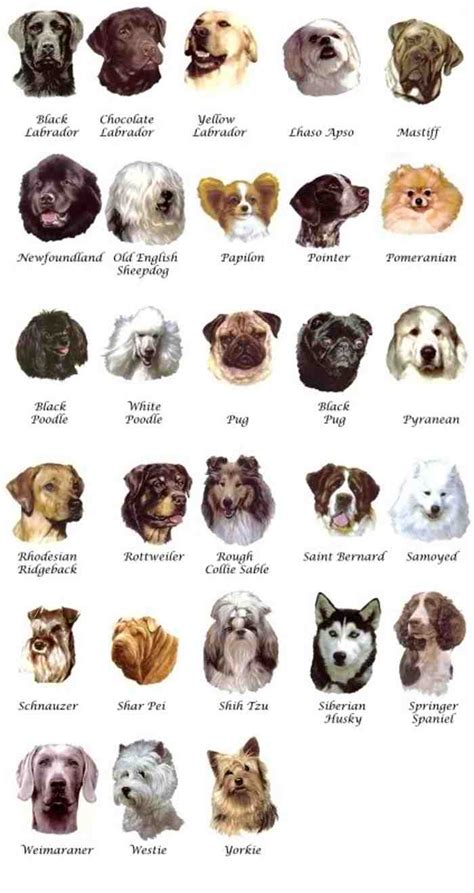 types of purebred dogs breed names home types