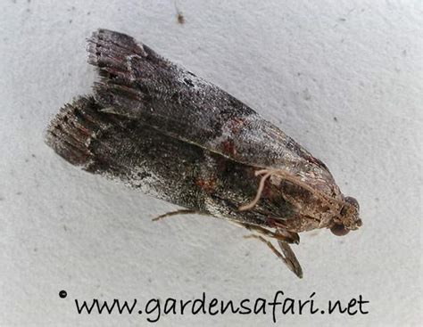 tiny moths all house tiny moths all house house decor ideas