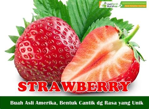 Jual Jual Bibit Strawberry bibit strawberry 30 cm jual benih murah