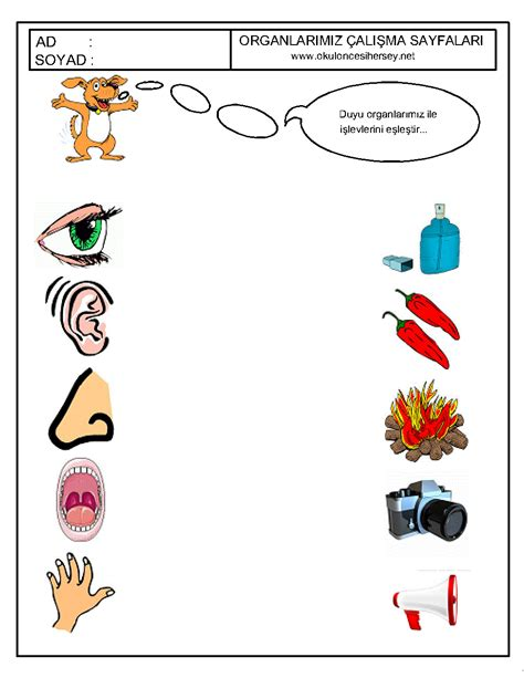 Five Senses Worksheets For Preschool by Crafts Actvities And Worksheets For Preschool Toddler And