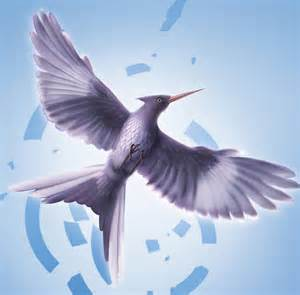 mockingjay bird mockingjay picture