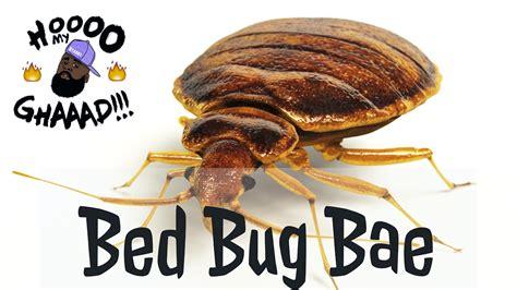 bed bugs youtube bed bug bae youtube