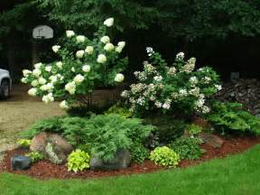 hydrangea trees knecht s nurseries landscaping