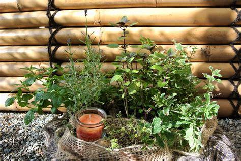 pflanzen garten versand kr 228 utersortimente garten pflanzen bambus und pflanzenshop