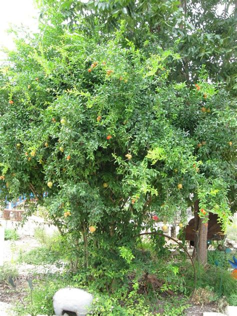 central fruit trees 71 best images about gardens shade on