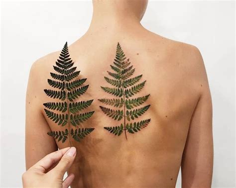 fern tattoos 25 best ideas about fern on