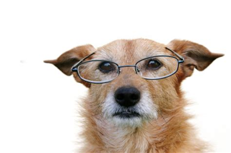 senior dog food all is well holistic pet care and natural pet products
