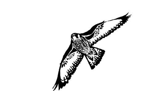 tattoo falcon by arijka22 on deviantart