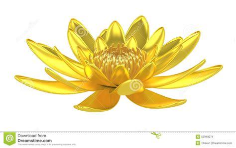 ninfea fiore di loto ninfea dorata fiore di loto fotografia stock