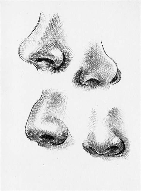 Sketches Nose by Feature Variations Noses Sketches