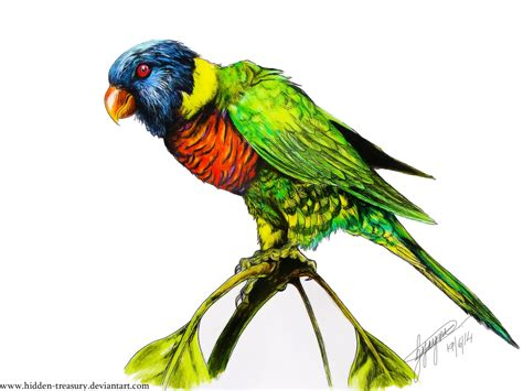 rainbow lorikeet tattoo speed drawing youtube