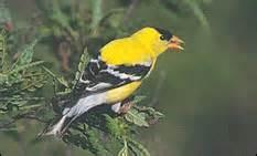 new hshire birds