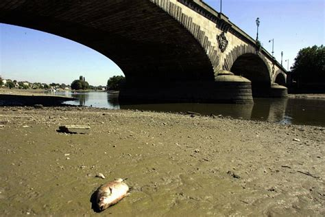thames river sewage londoners could be asked to drink recycled sewage water
