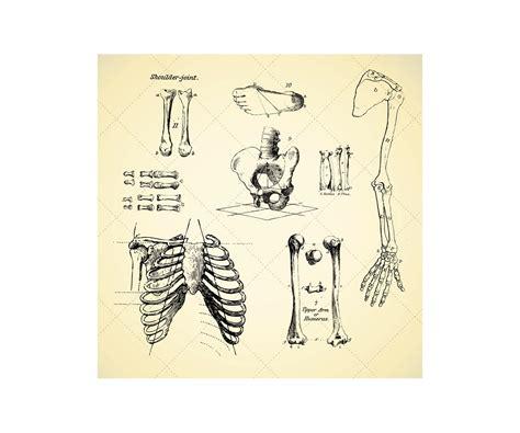 sketchbook vector sketch anatomy human bone vectors human skeleton anatomy