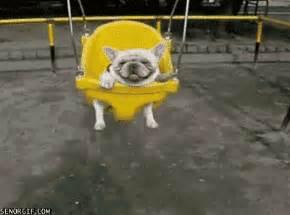 swing gif happy bulldog gif by cheezburger find on