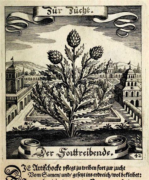 Le Artischocke by Cynara Which Is Artichoke Pantagruelion