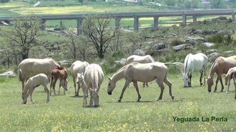 burros con yeguas hombres cojiendo burras y yeguas adanih com