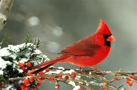 the gallery for gt cardinal in winter painting