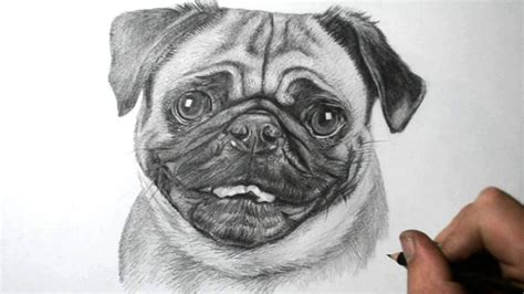 pug sketch how to draw a pug
