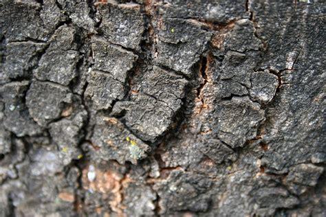 ruff bark cracked bark free stock photo domain pictures