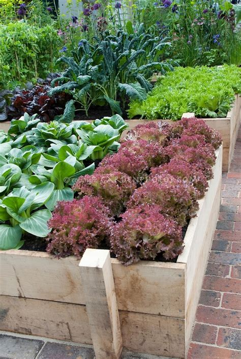 backyard raised bed vegetable garden raised bed vegetable garden in backyard vegetable herb