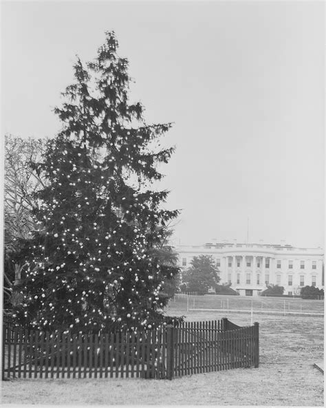 file daytime view of the white house christmas tree with