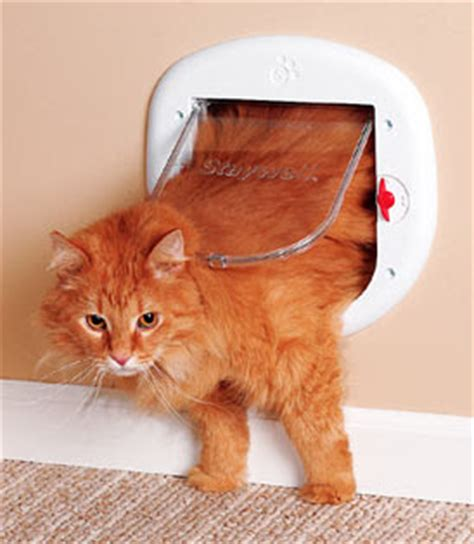 Who Invented The Cat Door by Barking At The Moon Sir Isaac Newton And The Cat Flap