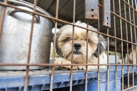puppy mills in florida breaking news aspca assists in seizure of nearly 100 dogs from florida puppy mill