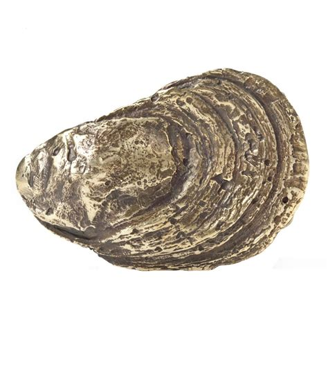 image gallery oyster shell