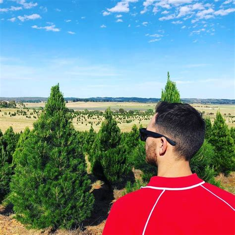 top 5 places to buy real christmas trees in canberra