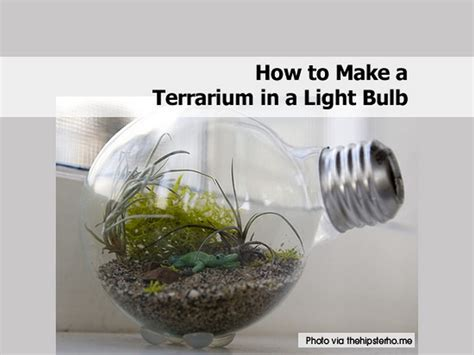 How To Make A Light Bulb by How To Make A Terrarium In A Light Bulb