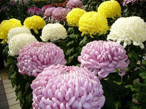 fiori dei morti i fiori dei morti immagini