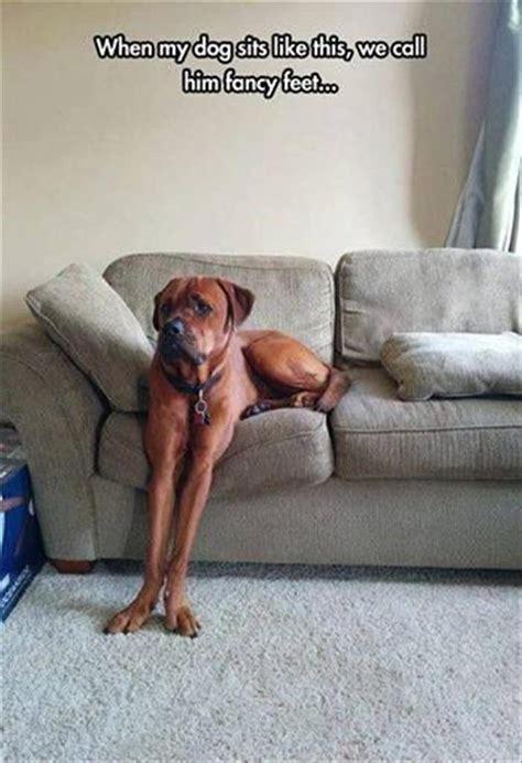 funny sofa pictures funny animal picture dump of the day 24 pics