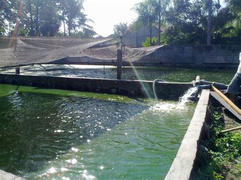Pompa Air Kolam Renang pompa air pompa kolam renang pompa kolam ikan jual