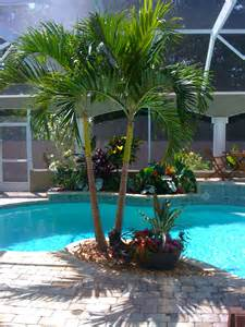Poolside Planters by Tropical Poolside Landscape Plantings Florida House