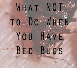 What Do Like In Bed by Controlling Bed Bugs By Let S Beat The Bed Bug