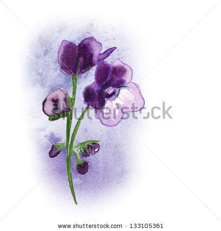 watercolor tattoo violet drawings of violets search tats