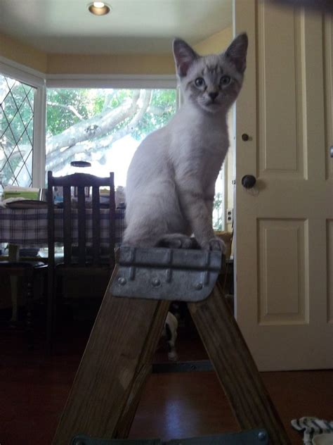 Cat With Stools by Step Stool Cat By Earthvsthederek On Deviantart