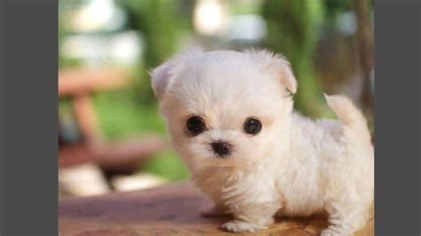 cute puppies funny puppies video compilation  hd