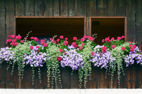 window flower box design 40 window and balcony flower box ideas photos home