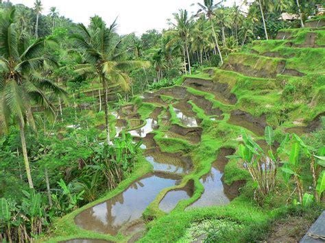imagenes de paisajes naturales bosques banco de im 193 genes 18 fotograf 237 as de paisajes naturales