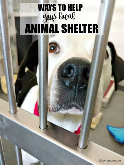local shelters ways to help your local animal shelter or rescue about a