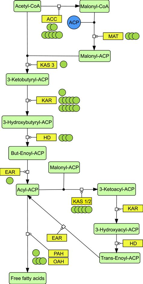 fatty acid synthesis pathway diagram fatty acid synthesis pathway reconstruction based on